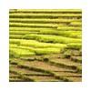 农产品地理标志产品品质鉴定检测