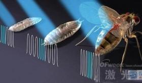 激光成功控制果蝇心跳 将为心脏起搏器带来重大变革