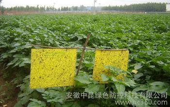 供应【安徽中昆】肥诱虫板公司、肥诱虫板价格、肥诱虫板厂家