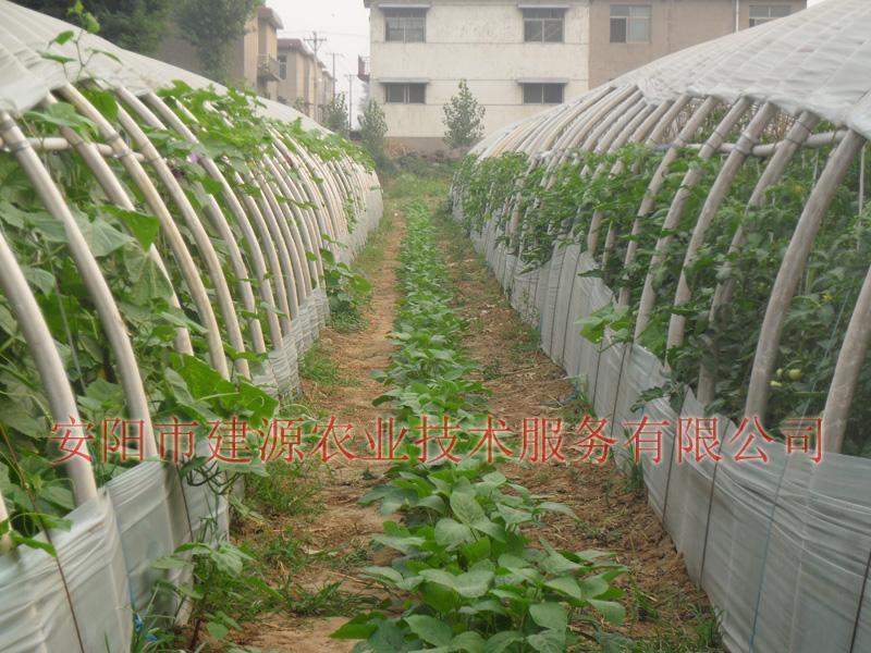 供应蔬菜大棚 种植大棚 大棚骨架设计,13523315525